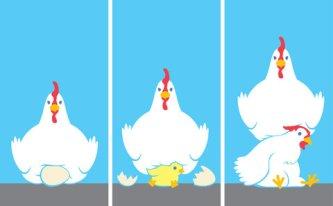 chicken-helicopter-parent